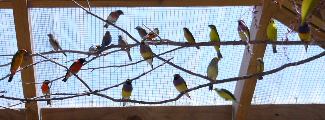 Mixed Aviary